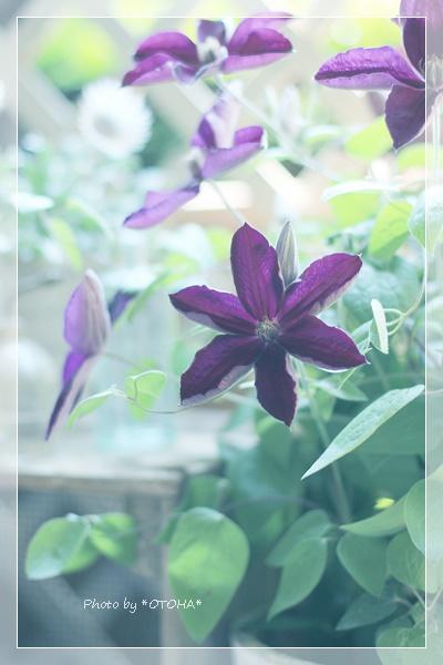 ★★★IMG_3143_edited-1